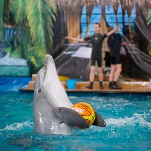 Дельфинарии, океанариумы Инзера