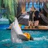 Дельфинарии, океанариумы в Инзере