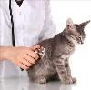 Ветеринарные клиники в Инзере